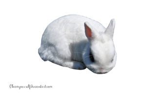 White Rabbit 2 PRECUT PNG Stock by Tris-Marie