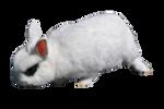 White Rabbit 3 PNG Stock