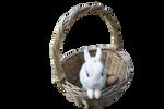 Cadbury Bunny PRECUT PNG Stock