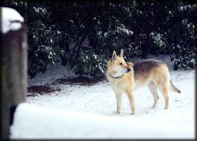 Winter by RayFloret