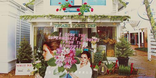 Supermarket flowers by DulceCandeela