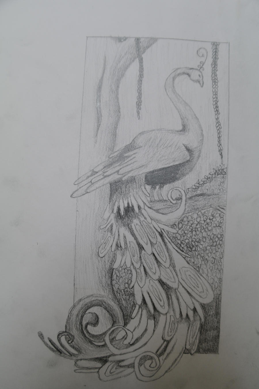 peacock sketch by ~TKayPhotography on deviantART