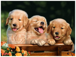 Golden Retriever by Varges