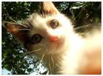Kitten3.
