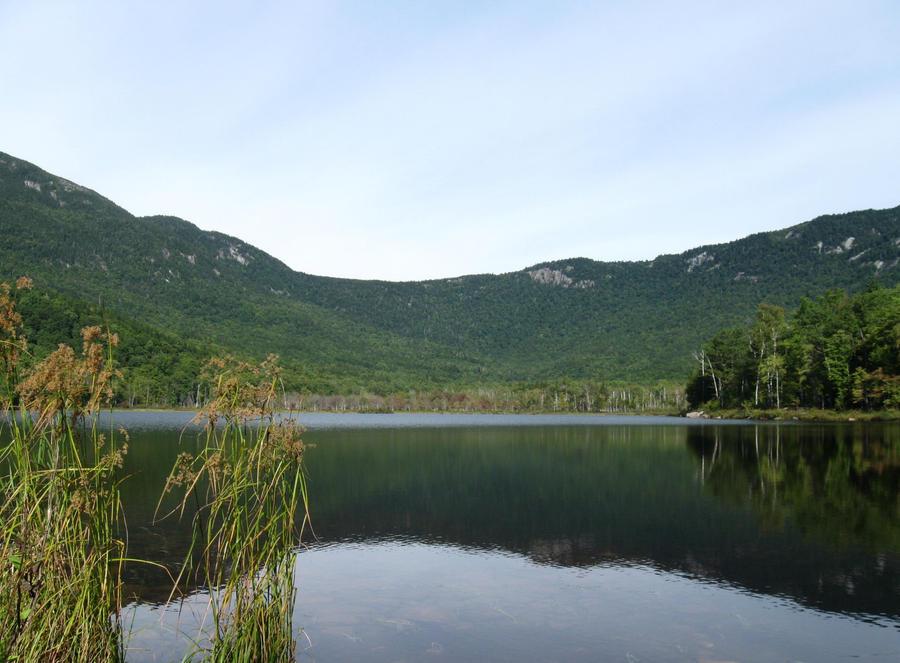 Basin Pond 5 by crazygardener