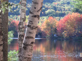 fall on Burnt Meadow Pond by crazygardener