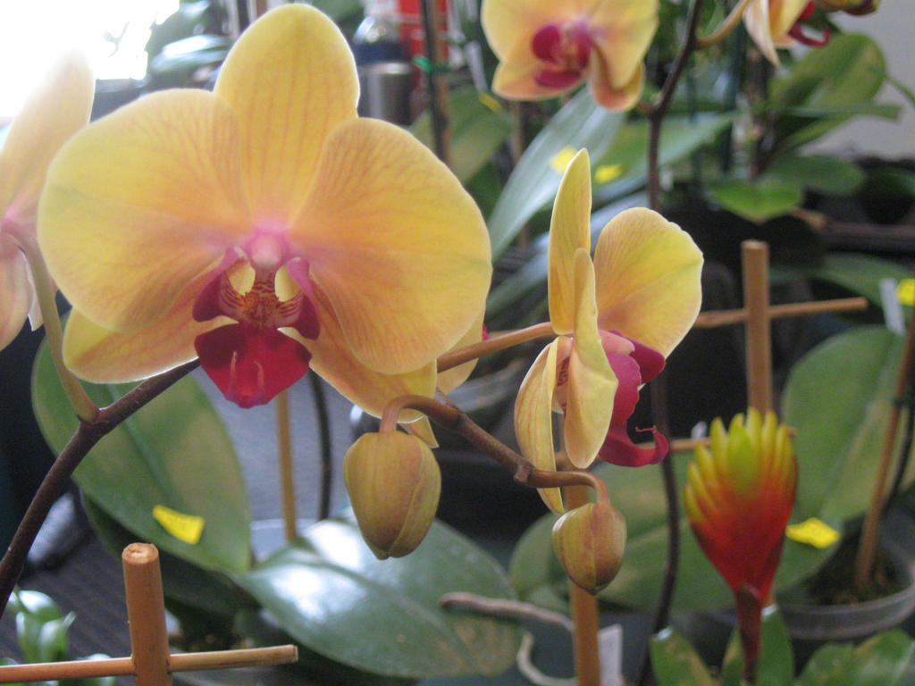 142  orchid show by crazygardener