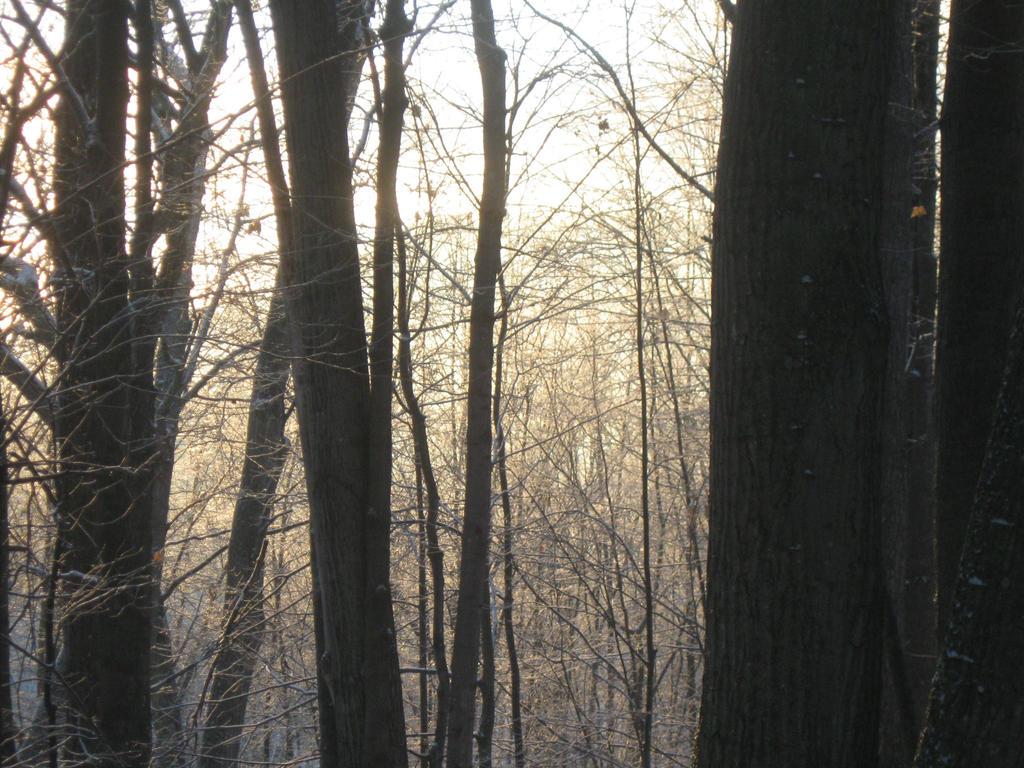 icy sunrise by crazygardener