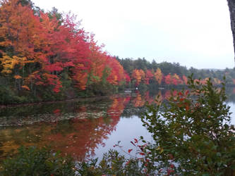 Burnt Meadow Pond in fall by crazygardener