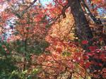 fall color close up