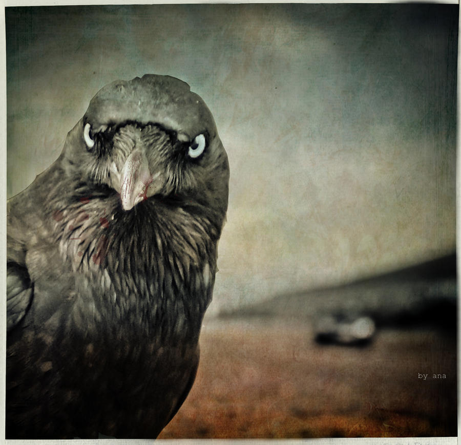 Animal by StateOfKaos