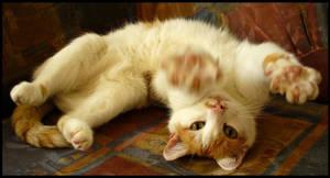 cat. by Jasmiini