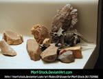 Dinorocks 2
