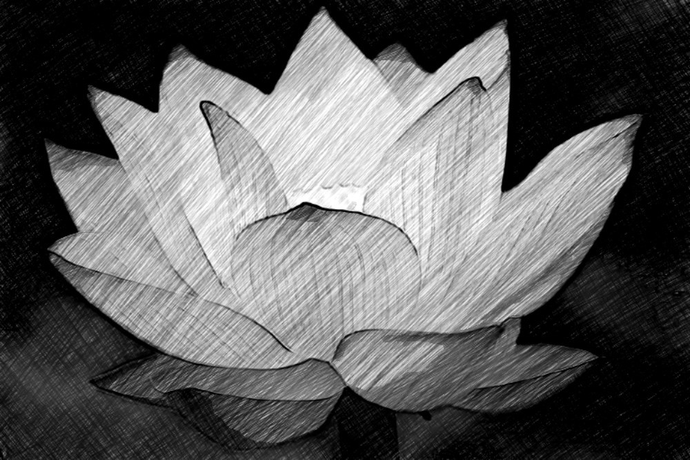 flower sketch by AngelsSilverWings