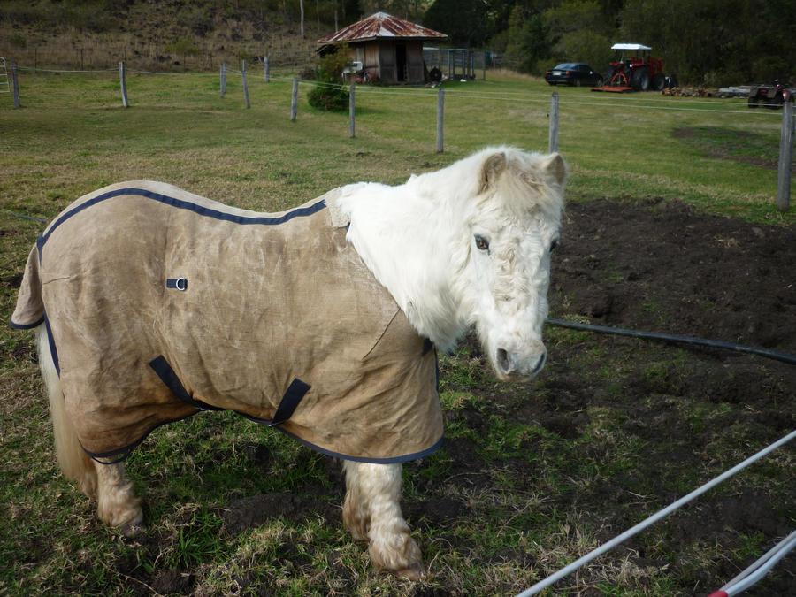 My Pony Snowy by LotteBubbles