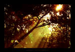 Autumn Sunrise by dlusion