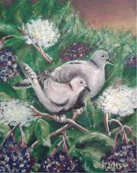 Turtle doves in elderberry bush (VIII_2015)