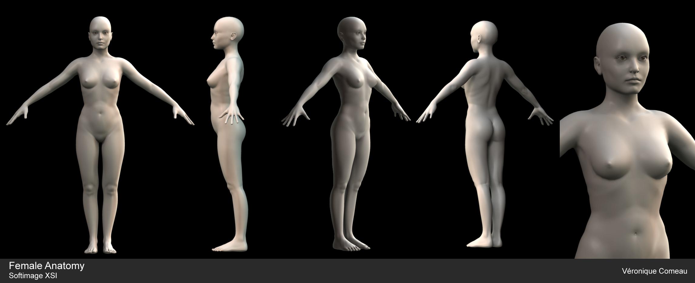 Female Anatomy By Verokomo On Deviantart