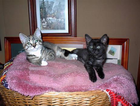 Carly and Nala 4
