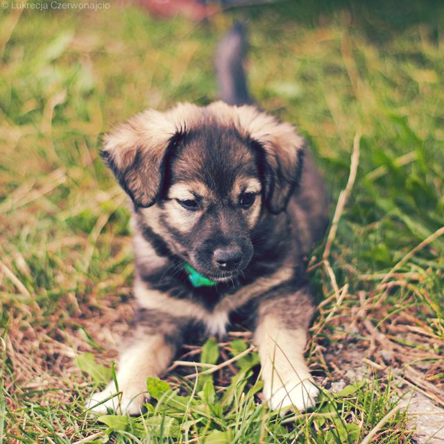 Puppy II by Lukreszja