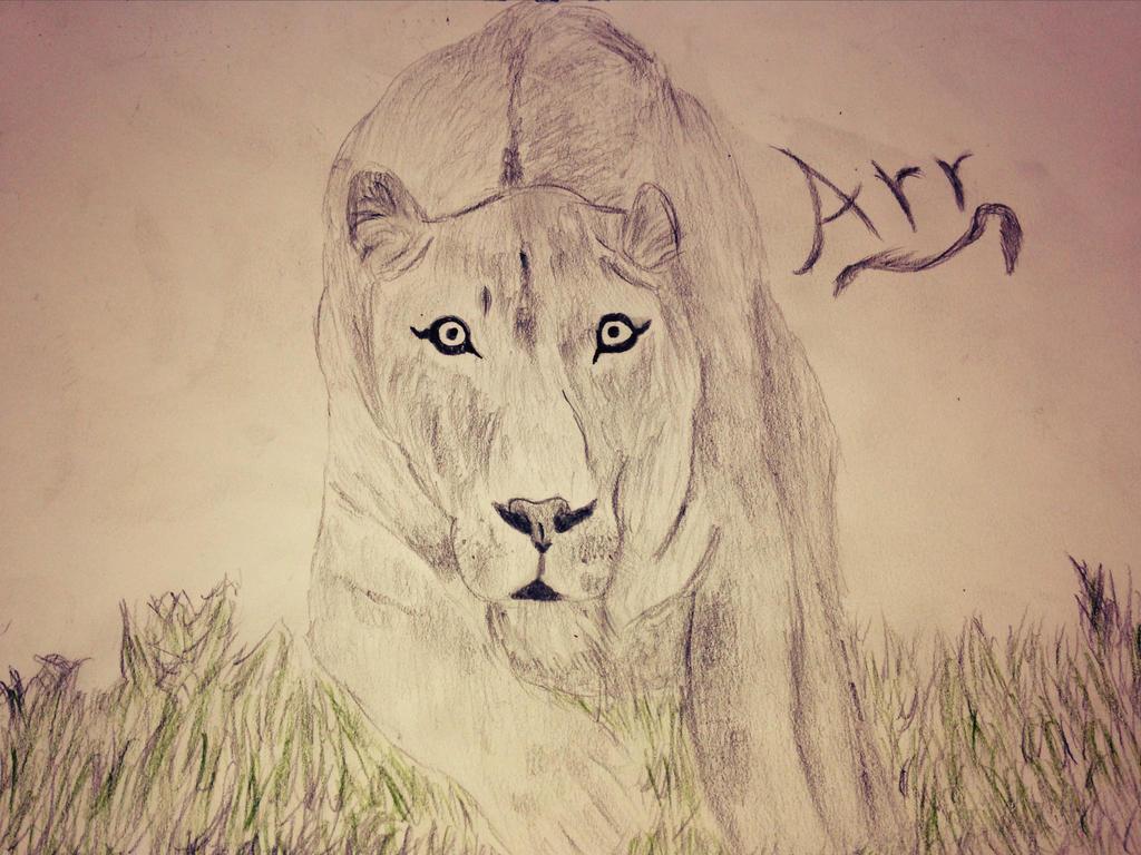 Female Lion Sketch By Sokis On DeviantArt