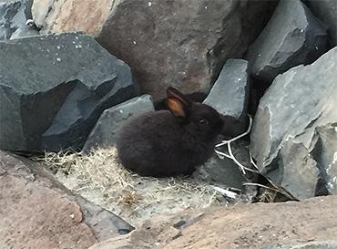 Rabbit on rocks by dreamwalker13