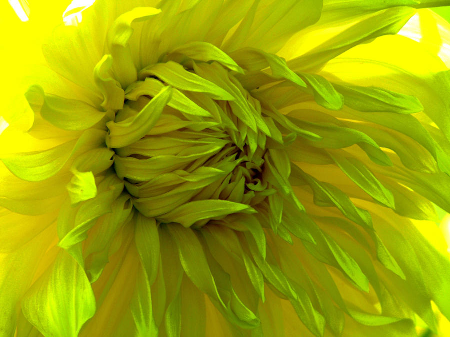 Sunny flower by IronCrusader