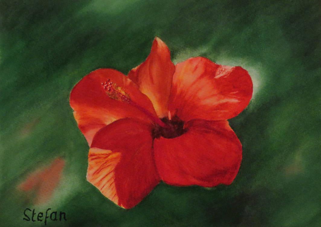 Hibiscus flower - 29x20 cm by skoerwi
