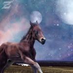 Moonlight Wanderings || Horse Manip by Zemeriffie