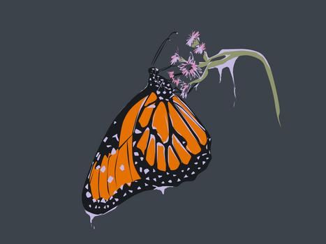 Flutter by winter.