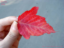 One leaf in my hand by Hardia-999