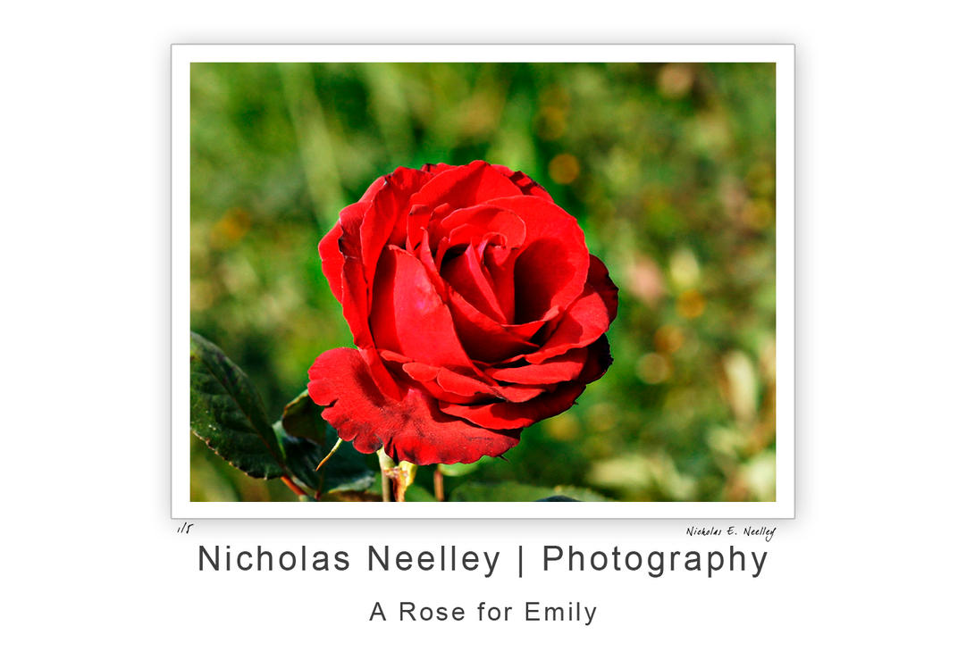 a rose for emily love until 'a rose for emily' quotes during the next few years it grew grayer and grayer until it attained an even pepper what does the rose in 'a rose for emily.