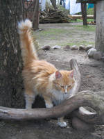 Pretty Kitty by MindaugasR