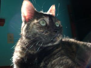 AdetaNoux67's Profile Picture