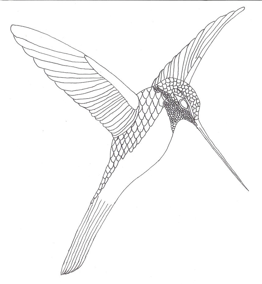 Line Drawing Hummingbird : The gallery for gt hummingbird sketches