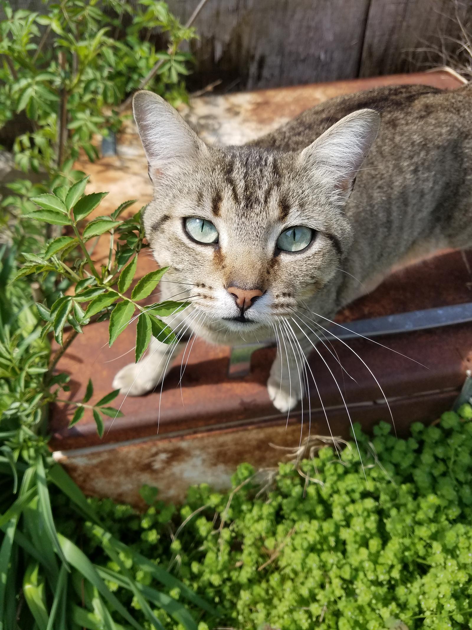 Rustic Cat by MissBuffySpears