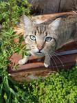 Rustic Cat