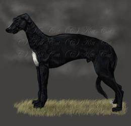 deerhound by Kitt-Cat