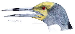 Palaeoeudyptes