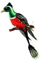 Microraptor gui by PaleoAeolos