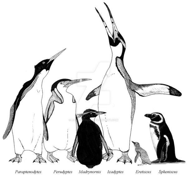 South american Fossil penguins by PaleoAeolos