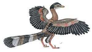 Paleo-Colours: Archaeopteryx