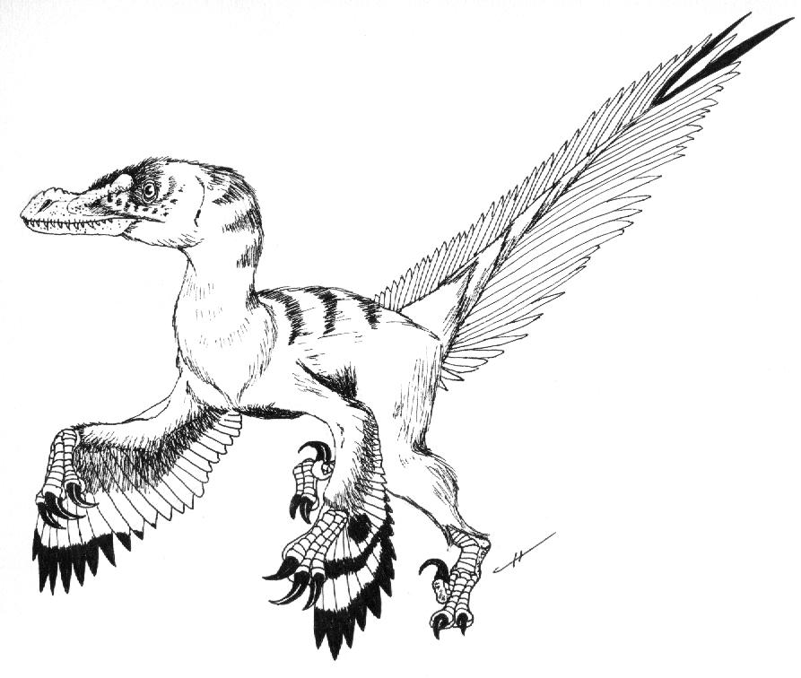 velociraptor coloring page - velociraptor mongoliensis by paleoaeolos on deviantart