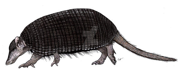 Parutaetus chilensis by PaleoAeolos