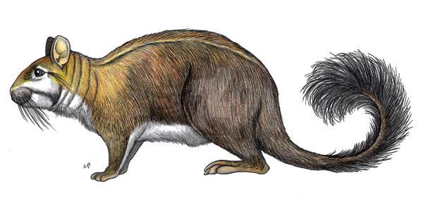 Eoviscaccia frassinettii by PaleoAeolos