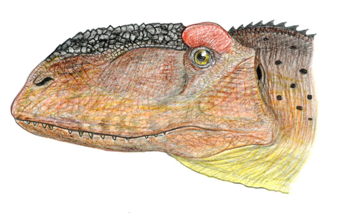 Abelisaurus comahuensis by PaleoAeolos