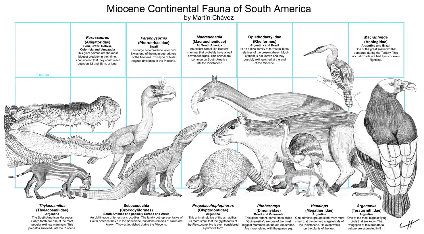 Miocene Fauna of South America by PaleoAeolos