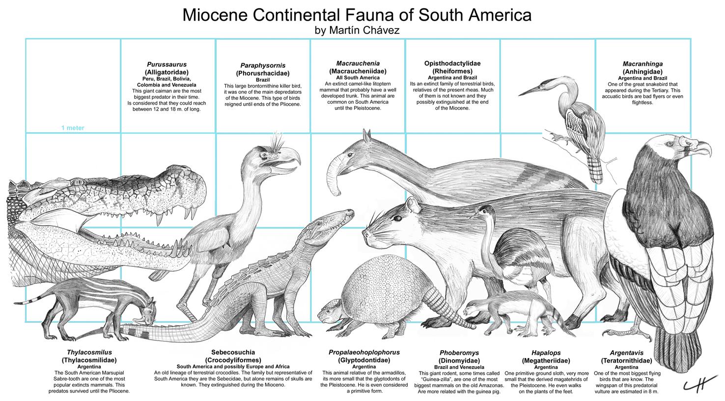 Miocene Fauna of South America