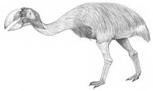 Dromornis stirtoni by PaleoAeolos
