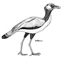 Neocathartes by PaleoAeolos